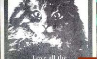 珍爱我们的伴侣动物 成像作品混凝土小猫